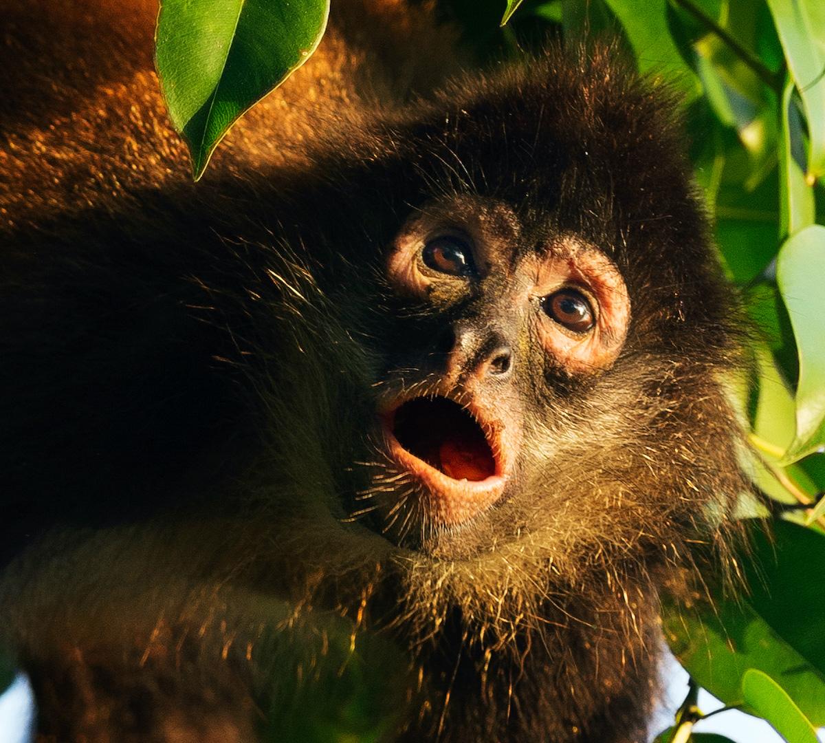 Costa Ricas Regnskogar