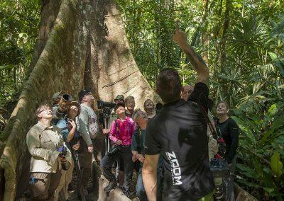 Costa Ricas regnskog