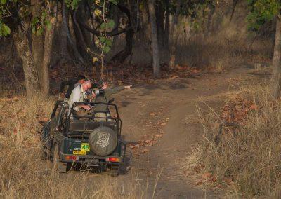 Tigersafari i Indien