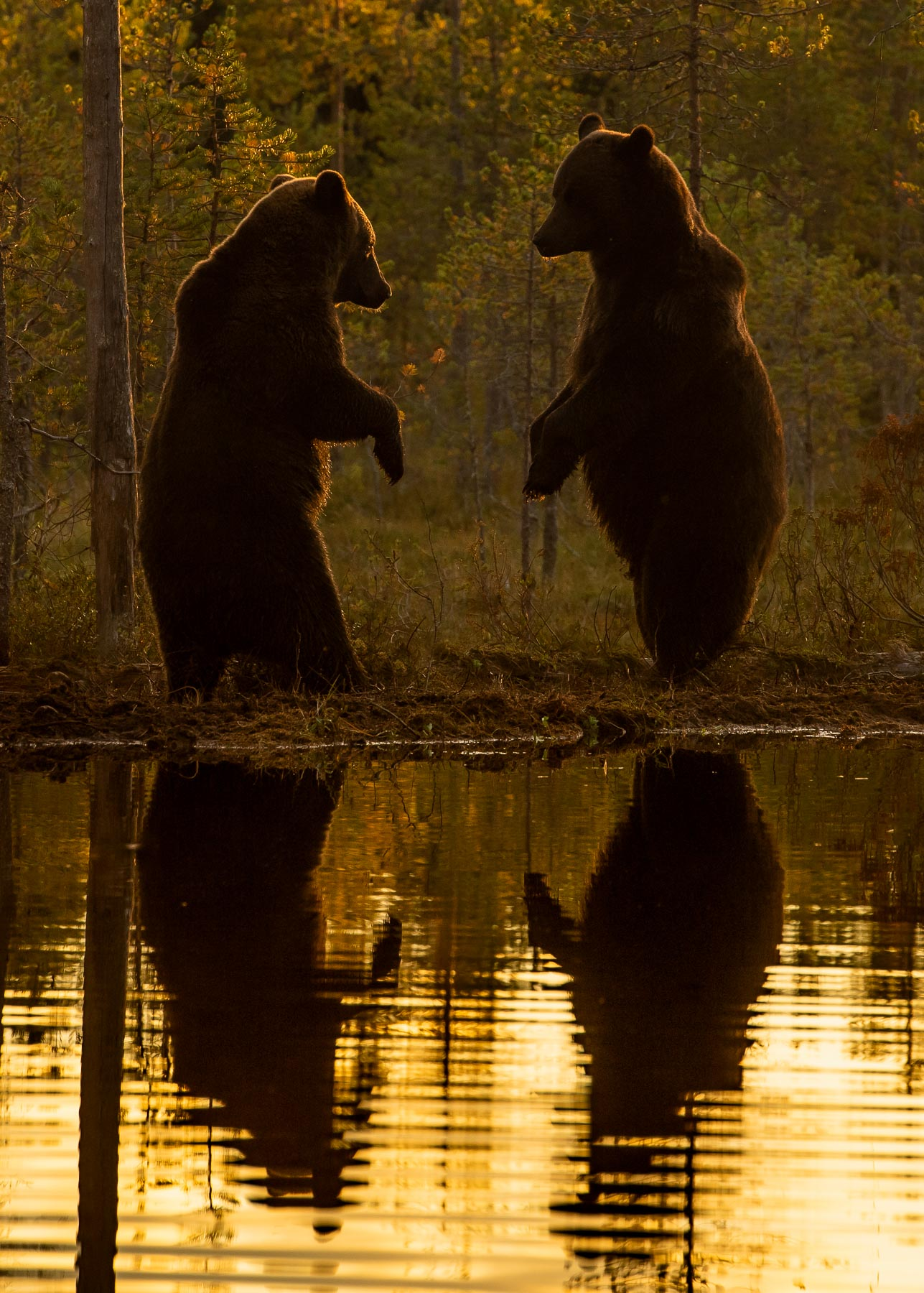 Foto: Roger Brendhagen
