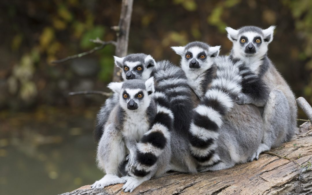Magiska Madagaskar