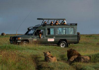 Fotosafari i Kenya