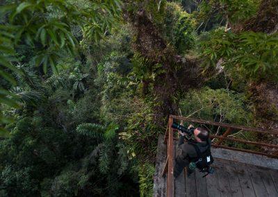 Uppe i trädkronorna i Amazonas