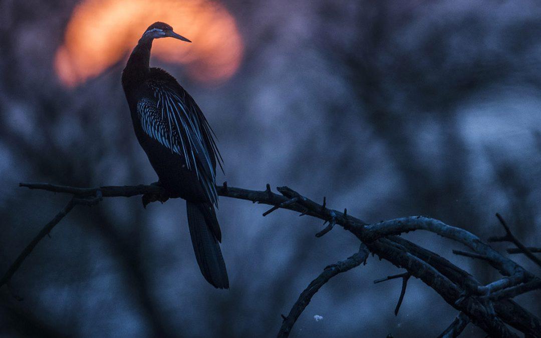 Indiens Fågelparadis