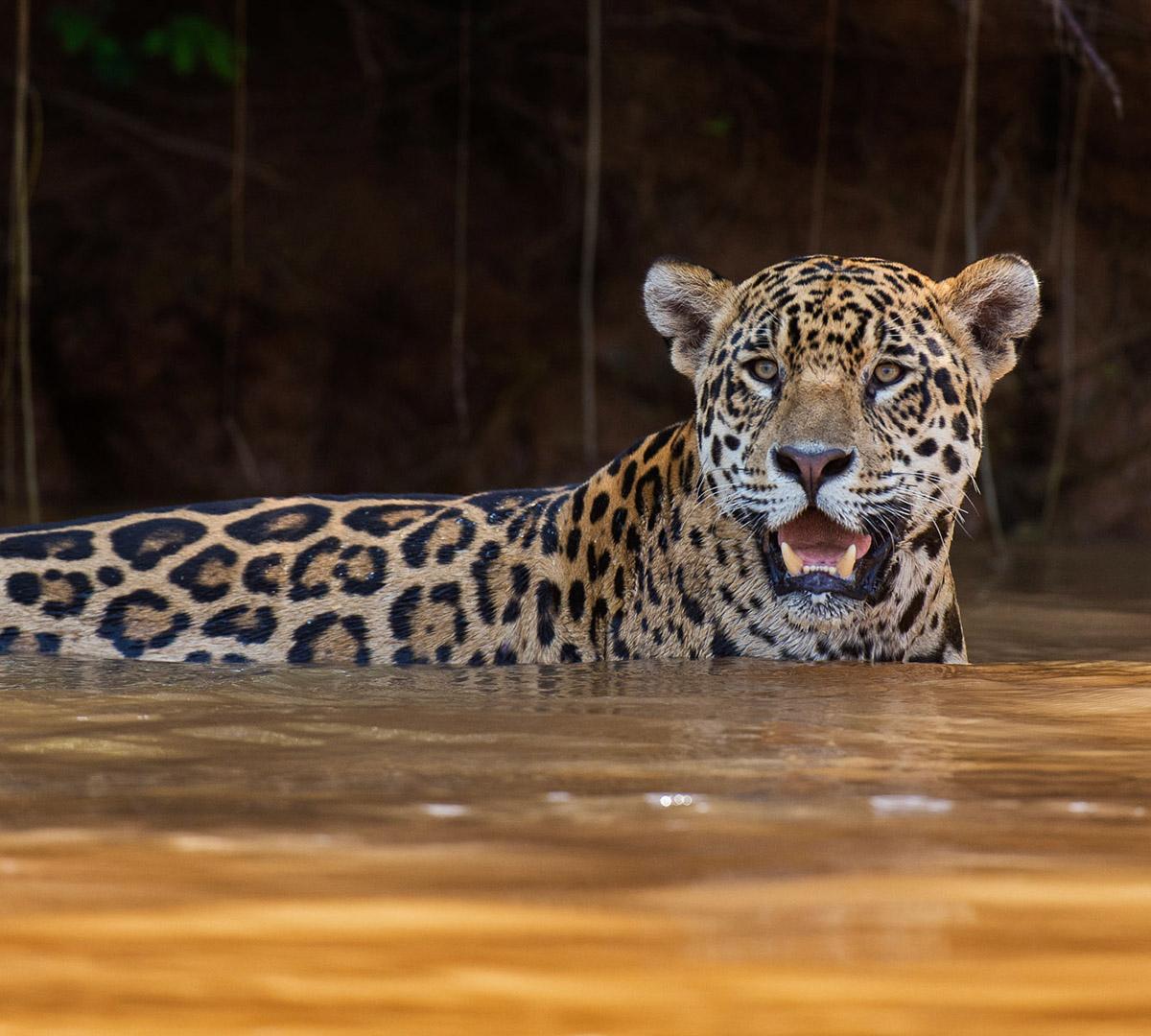 Pantanals Djurliv