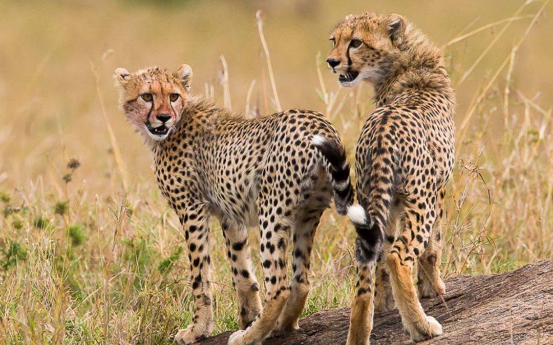 Masai Mara Off-road