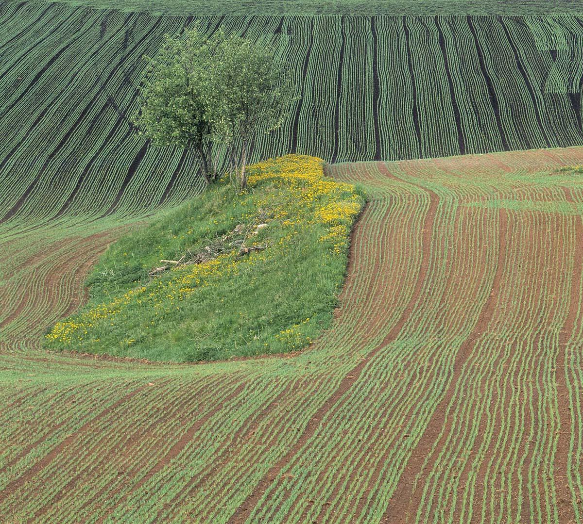 Vårens Landskap