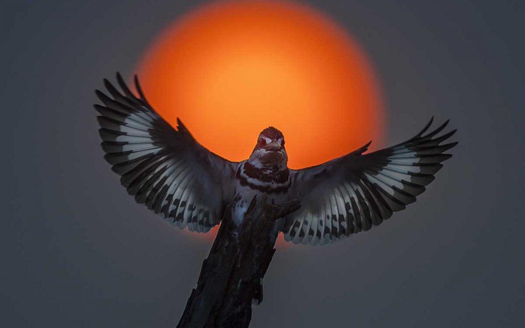 Fågelfoto