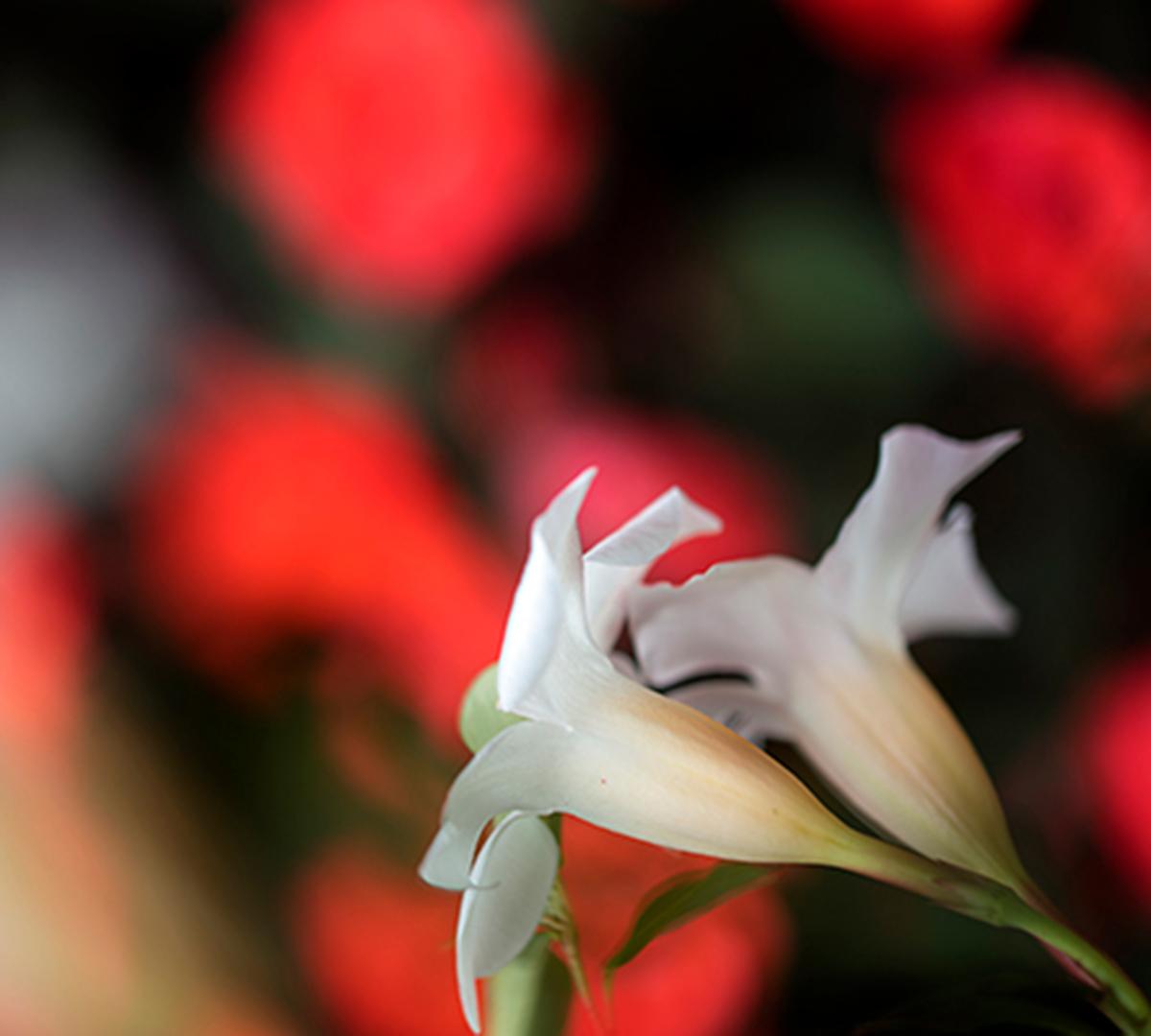 Italiens Blomsterparadis