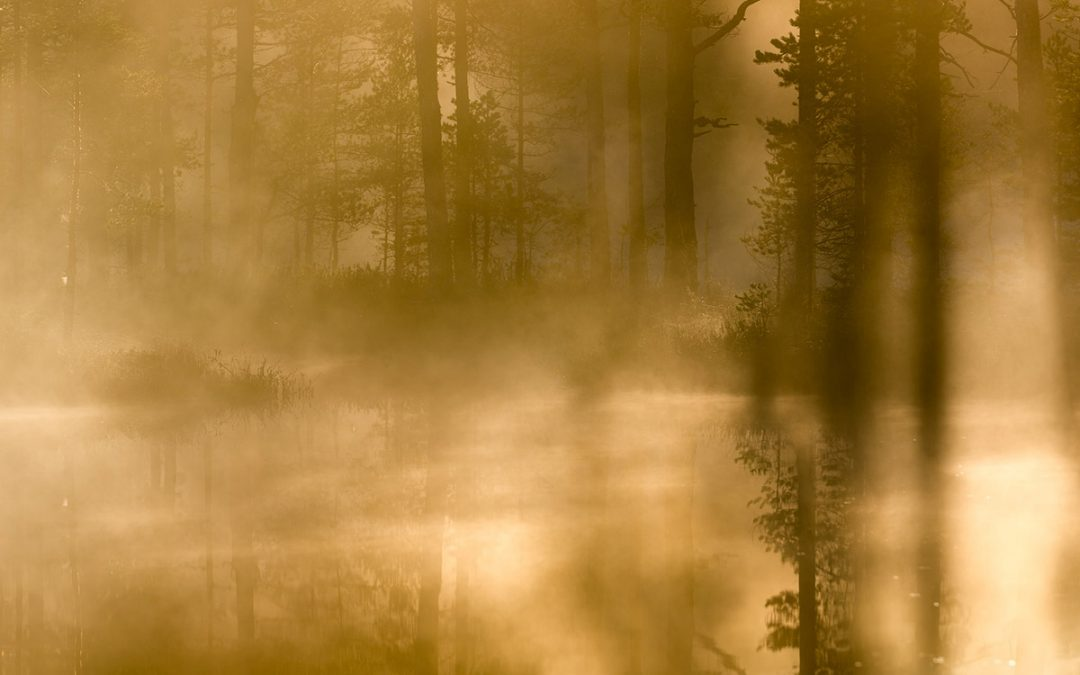 Morgondimma i Höstlandskap