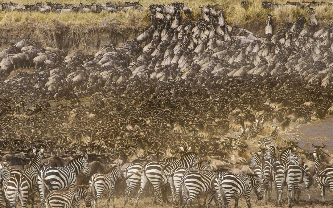 The Great Migration Close Up