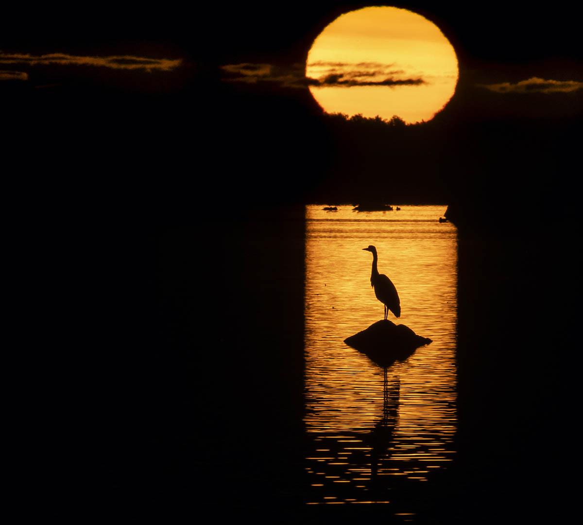 Kreativ Fågelfotografering