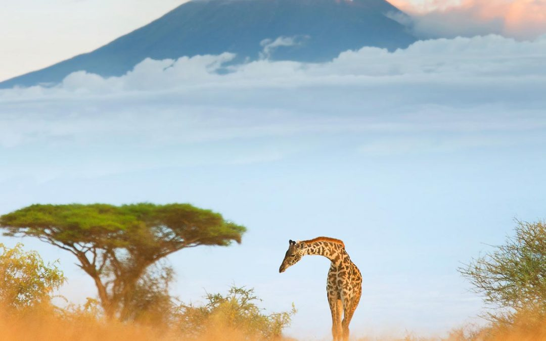 Kenya Travel Photography