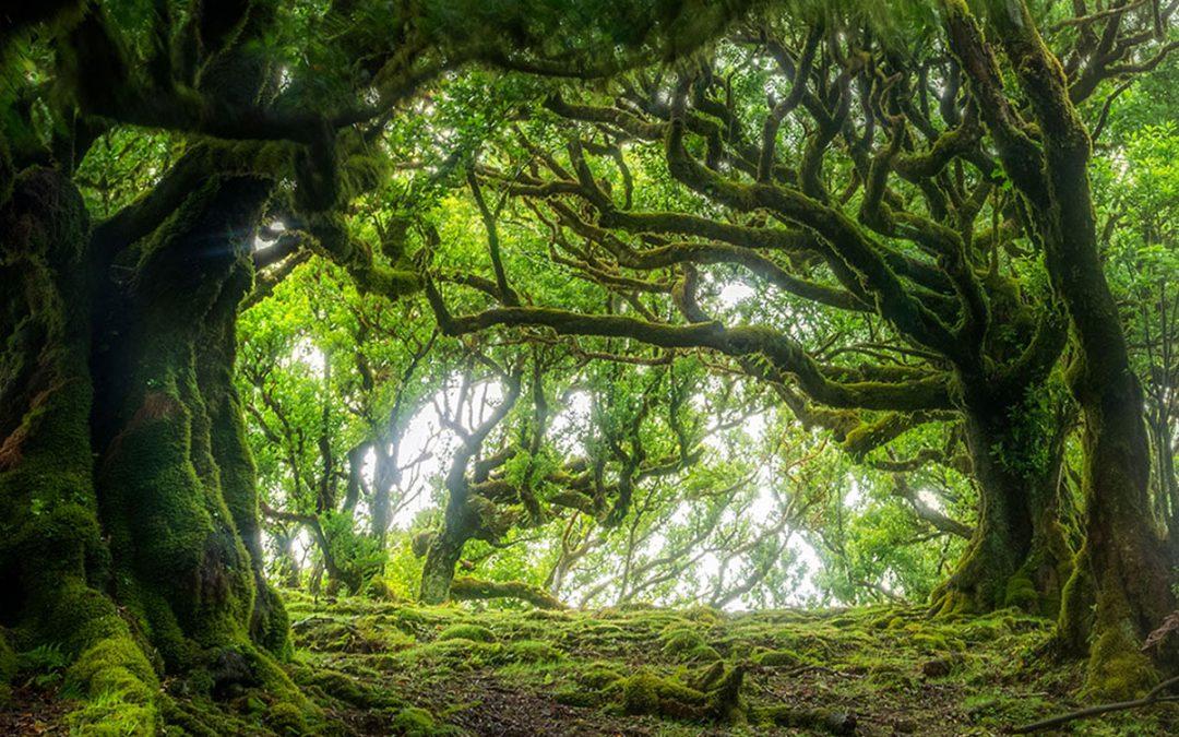 Madeiras Unika Landskap