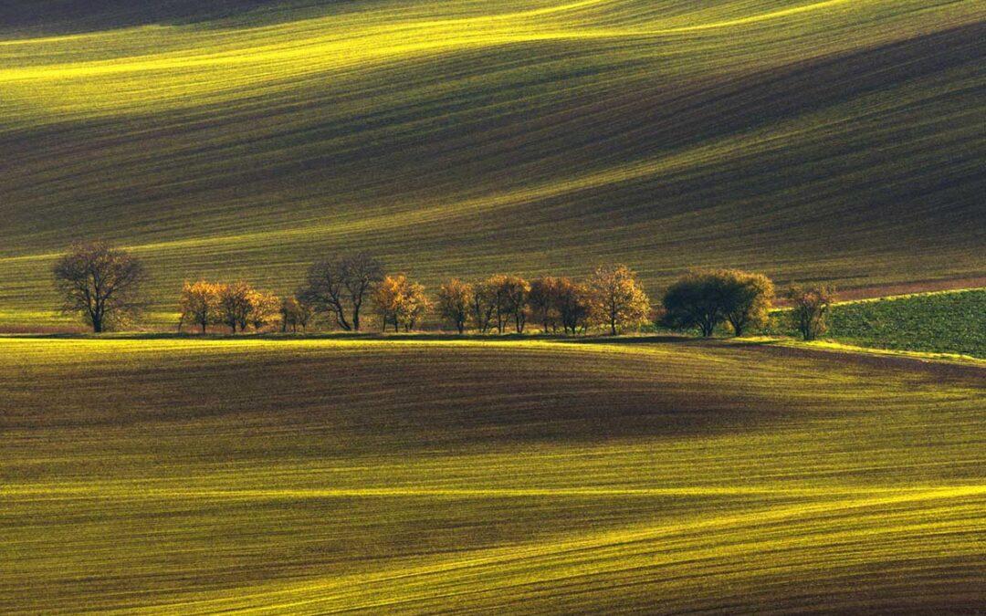 Tjeckiens Böljande Landskap